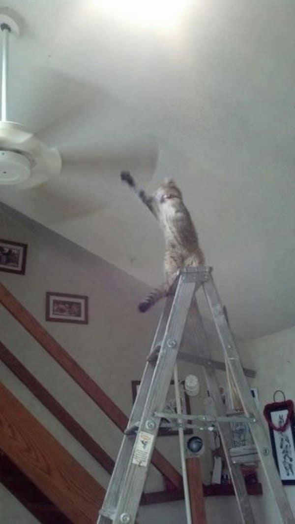 16+ котов, которые пожалели о своем решении...