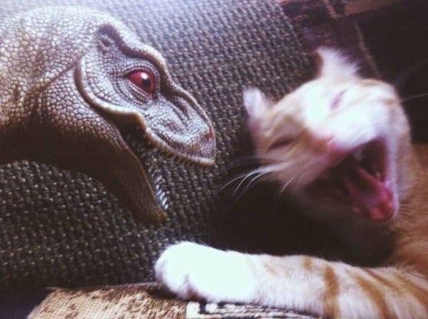 19 смешных фото прямиком из царства животных! рис 6