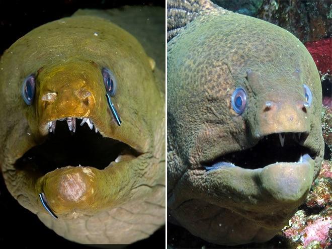 16 доказательств того, что мурены - самые смешные обитатели морей! рис 3
