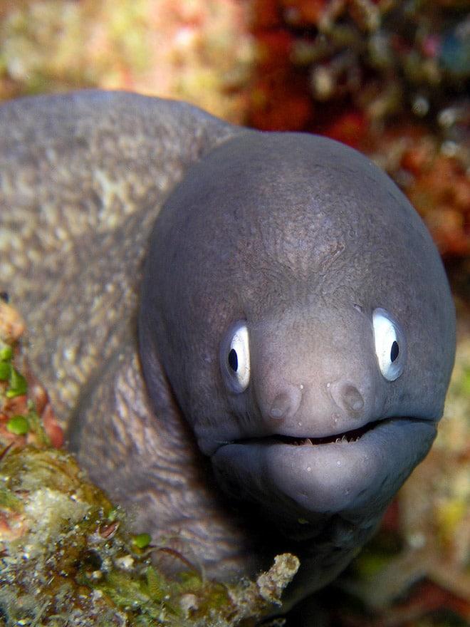 16 доказательств того, что мурены - самые смешные обитатели морей! рис 2