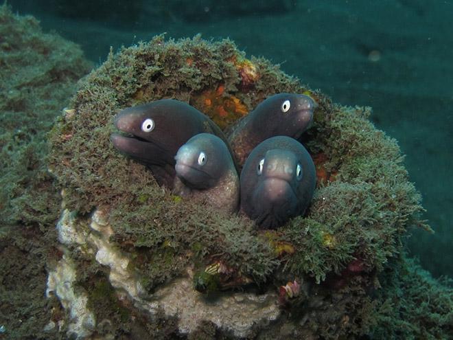16 доказательств того, что мурены - самые смешные обитатели морей! рис 13