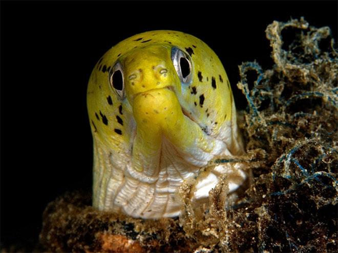 16 доказательств того, что мурены - самые смешные обитатели морей! рис 9