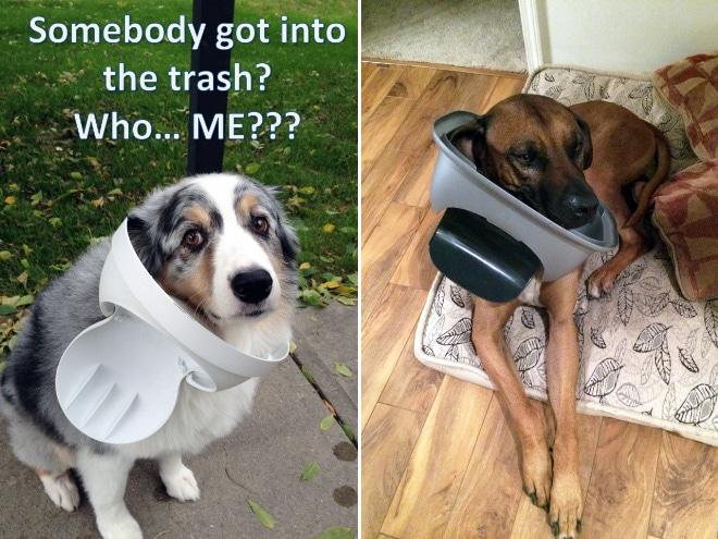 16 собак, которые переплюнули котов по части плохого поведения рис 6