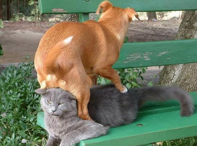 16 собак, которые переплюнули котов по части плохого поведения рис 3