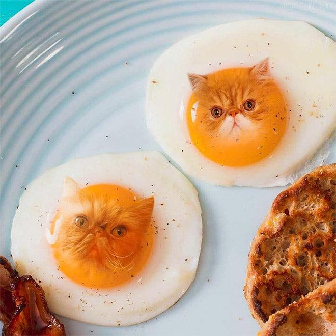 18 кошек маскируются под еду с легкой руки российской художницы! 9