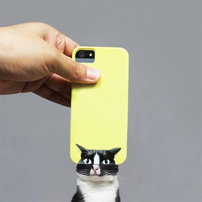 18 фото кошки, чей Инстаграм называют самым ярким и интересным!