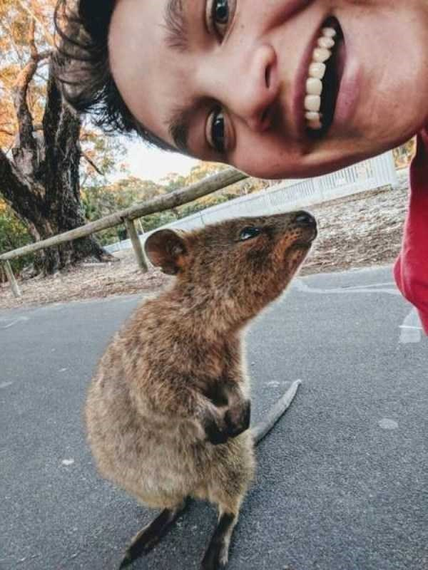Тем временем в Австралии...