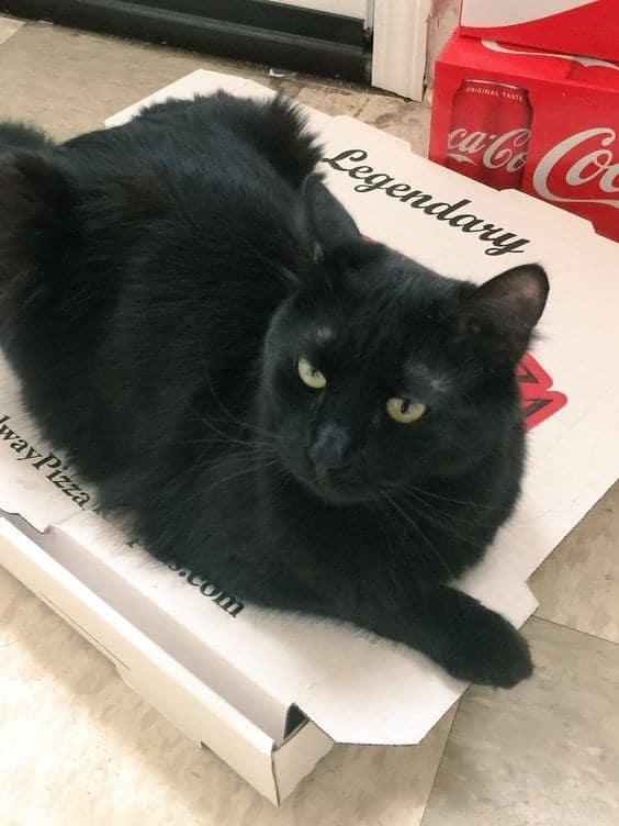 14 кошек и собак, которые без ума от пиццы! рис 3