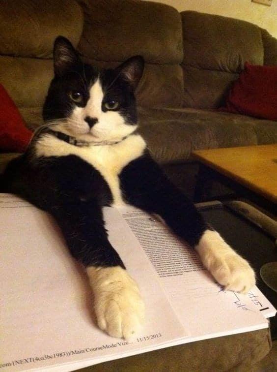 """17 котов-""""закладок"""", которым есть что сказать об этой вашей книге!"""