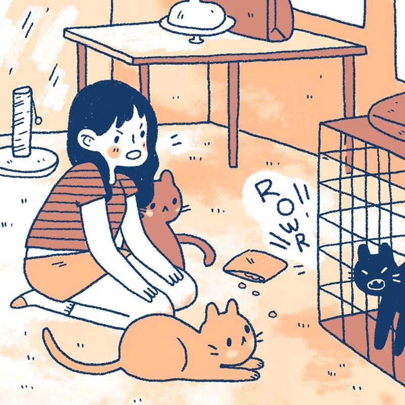 14 комиксов, который поймет каждый, у кого есть кот!