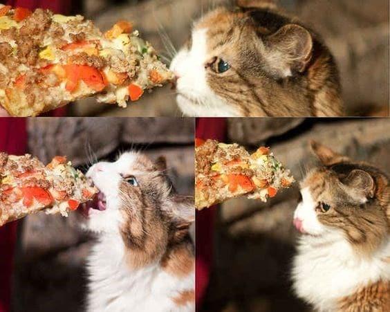 14 кошек и собак, которые без ума от пиццы! рис 9