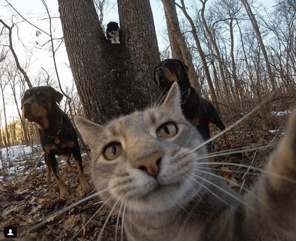 Селфи-кот покоряет сеть крутыми снимками!