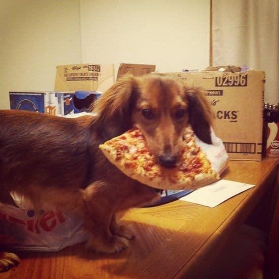 14 кошек и собак, которые без ума от пиццы! рис 5