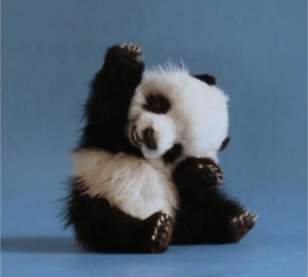 малыш панды