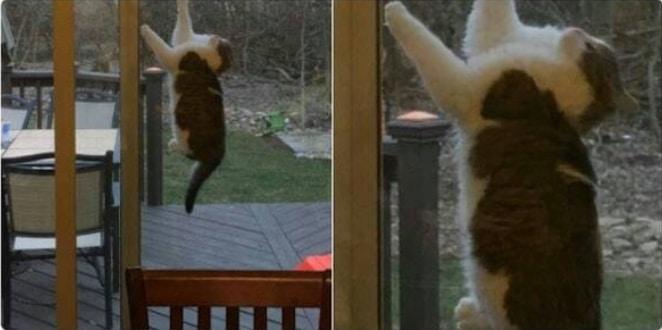 16+ твитов о котах, которые однозначно поднимут вам настроение! 22