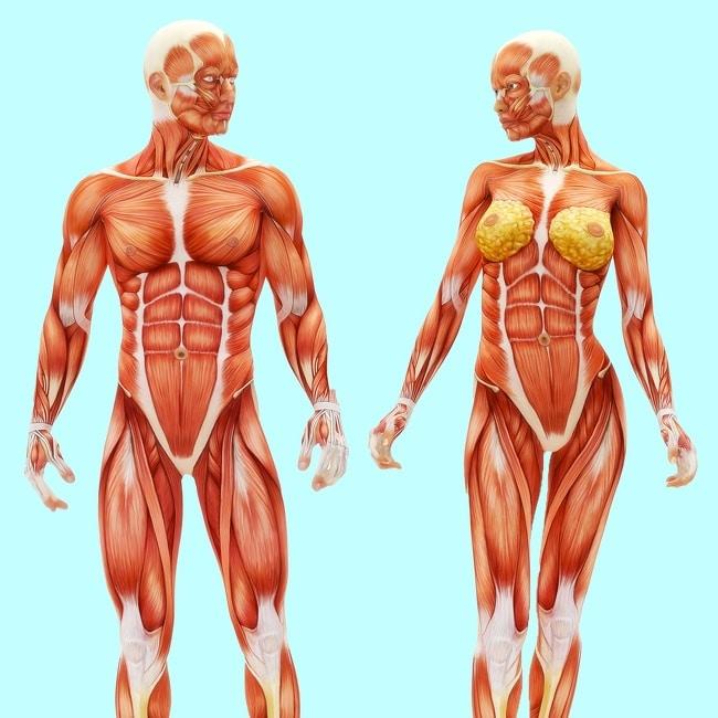 10 вещей которые случатся с вашим телом, если вы будете больше ходить пешком! рис 7