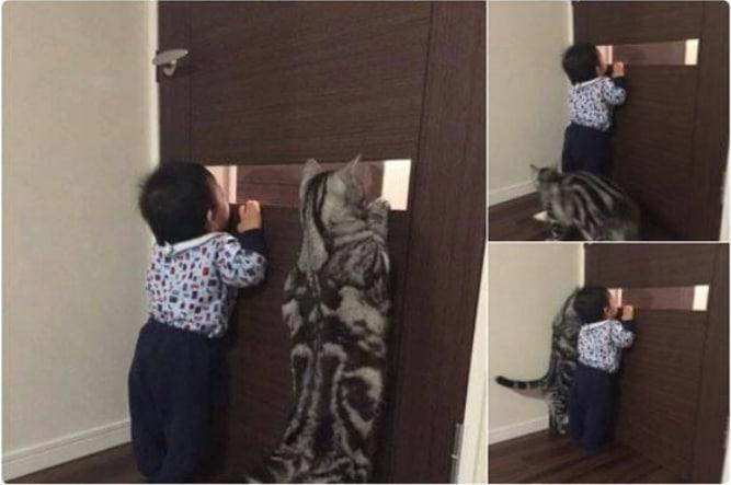 16+ твитов о котах, которые однозначно поднимут вам настроение! 20