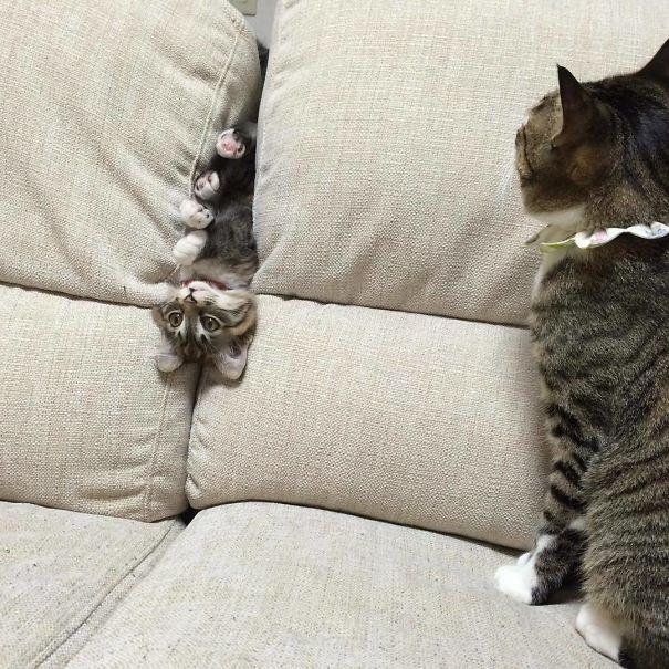 Fatal Error! 19 котов, которые забыли, как ими быть! 14