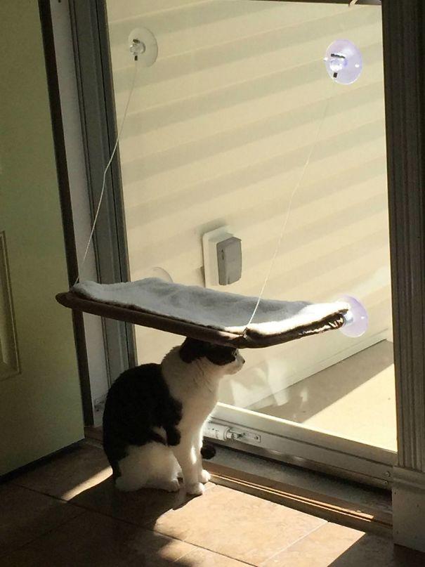 Fatal Error! 19 котов, которые забыли, как ими быть! 16