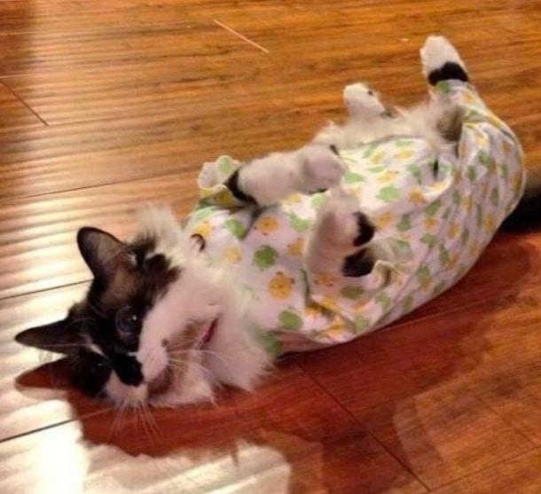 животные в пижамах 14