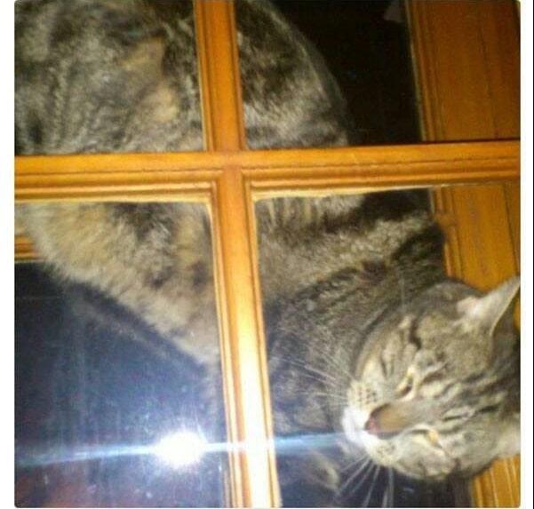 16+ твитов о котах, которые однозначно поднимут вам настроение! 11