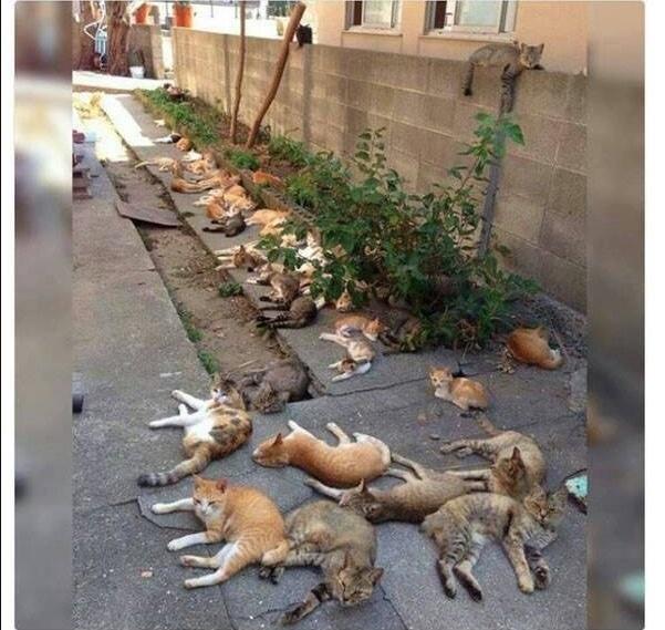 16+ твитов о котах, которые однозначно поднимут вам настроение! 16