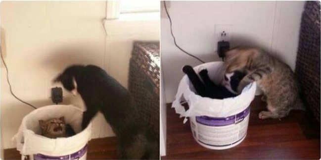 16+ твитов о котах, которые однозначно поднимут вам настроение! 8