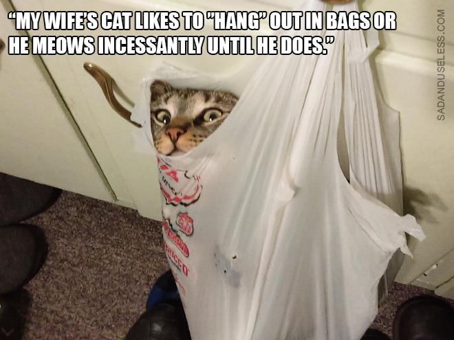 Коты и пакеты 16