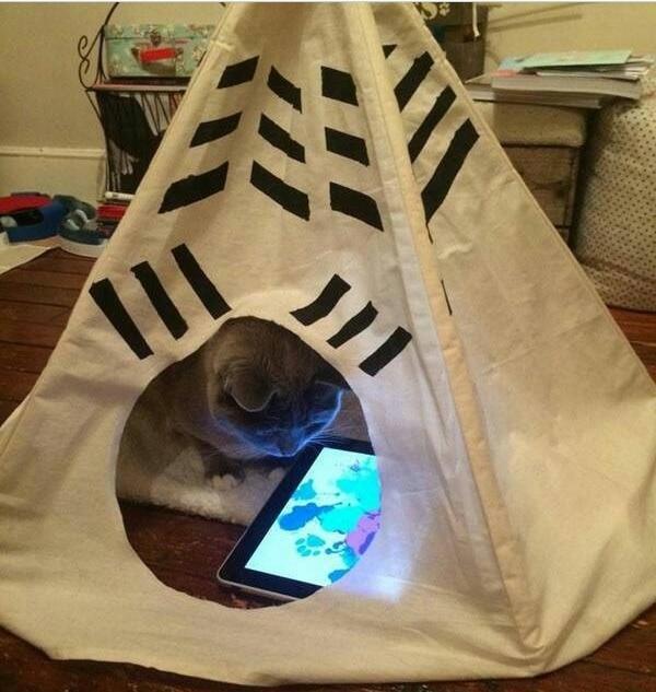 16+ твитов о котах, которые однозначно поднимут вам настроение! 7
