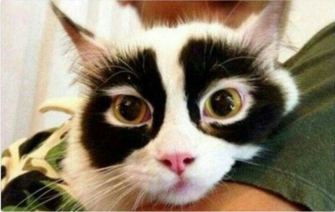 16+ твитов о котах, которые однозначно поднимут вам настроение! 13