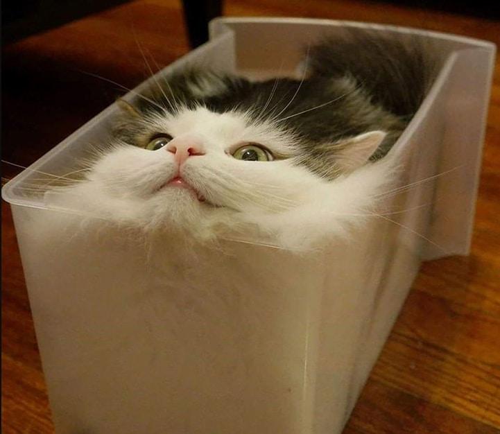 кошка сидит в контейнере