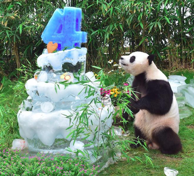 панды 9