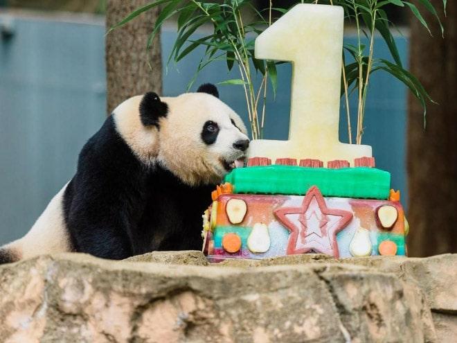 панды 5