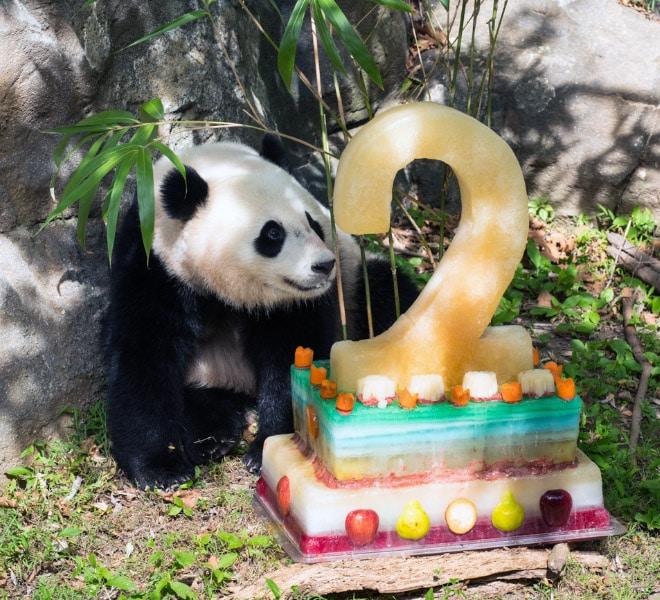 панды 3