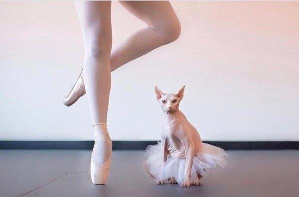 балерина и кошка