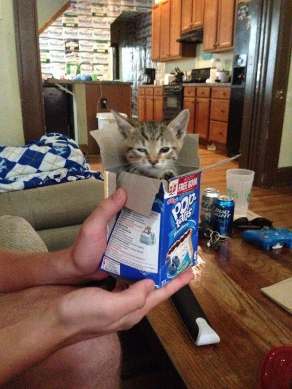 смешные коты 7