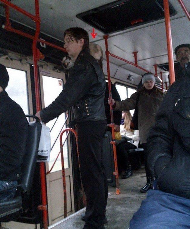 животные в автобусе