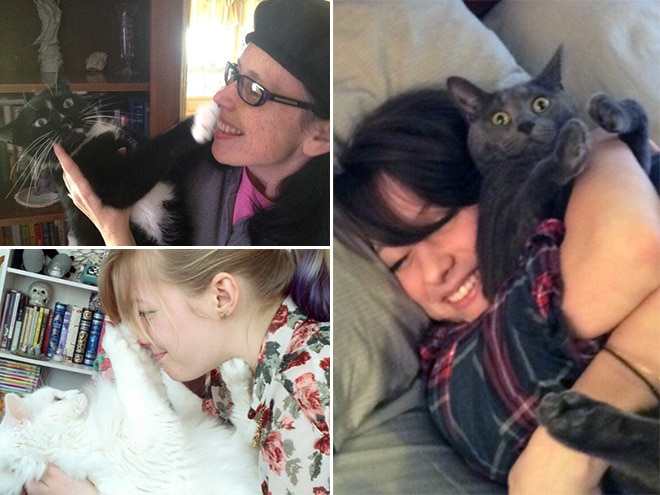 смешные коты 4
