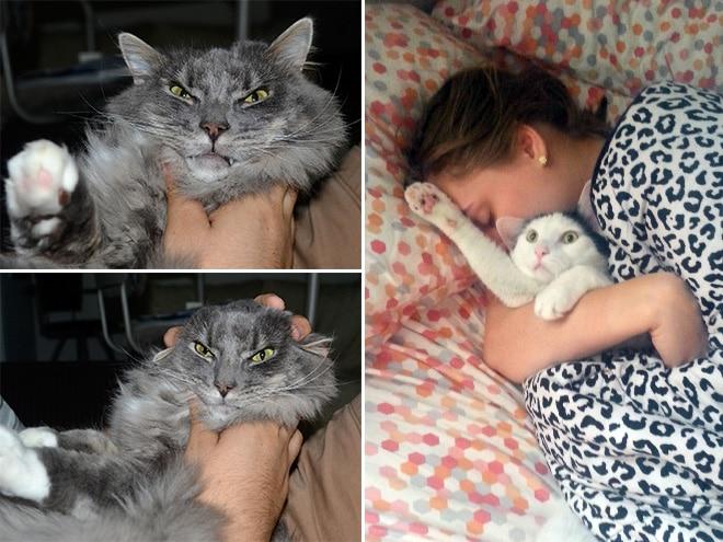 смешные коты 11