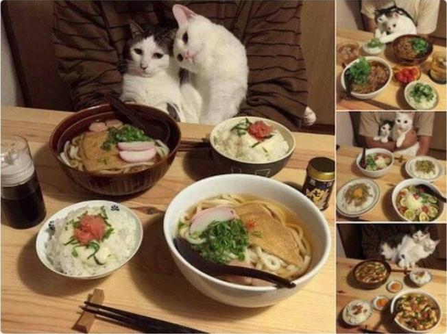16+ твитов о котах, которые однозначно поднимут вам настроение! 2