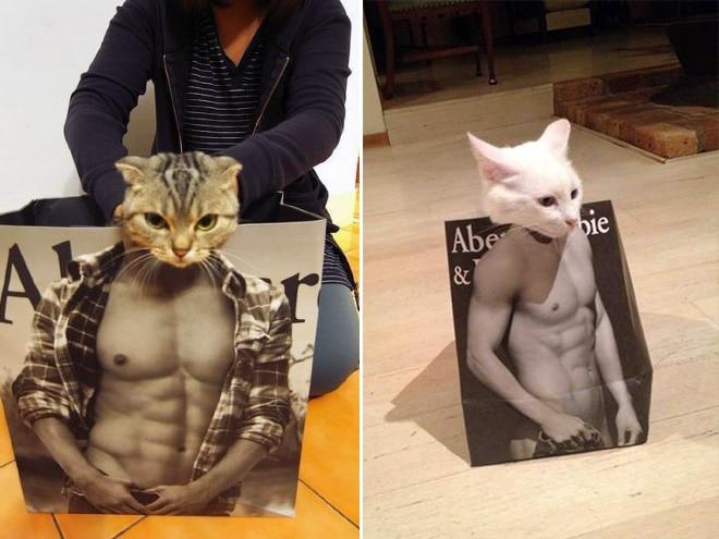 Коты и пакеты 7