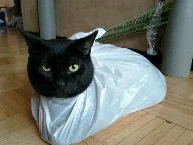 Коты и пакеты 4
