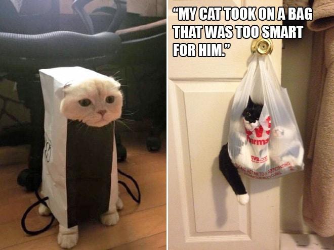 Коты и пакеты 15