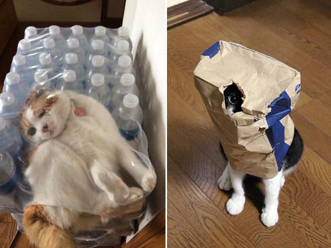 Коты и пакеты 13