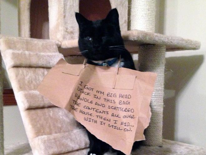 Коты и пакеты 12