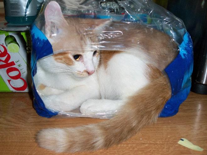 Коты и пакеты 8