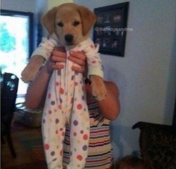 животные в пижамах