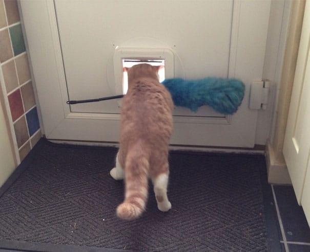 Fatal Error! 19 котов, которые забыли, как ими быть! 3