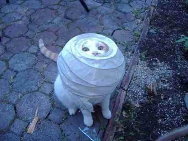 Смешные коты 6