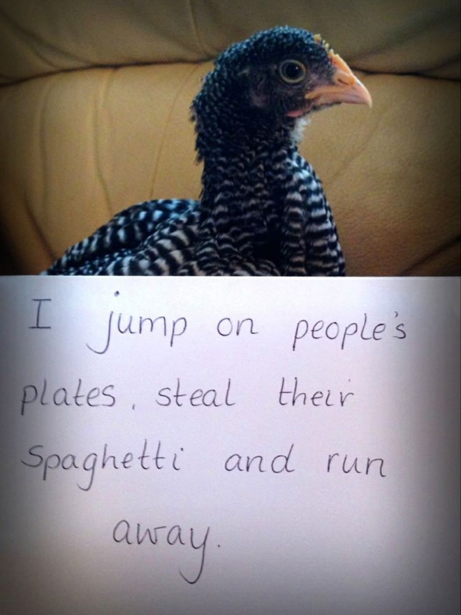 курицы 12